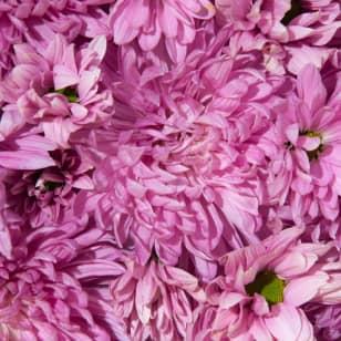 Product Page Key Ingredients: Chrysanthemum