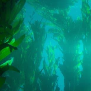 Product Page Key Ingredients: Kelp