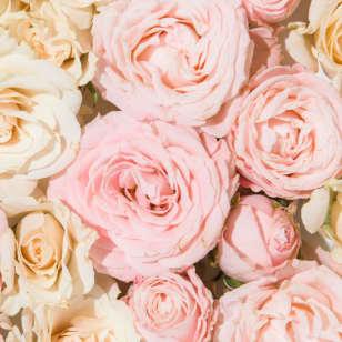Product Page Key Ingredients: Rose Hydrosol