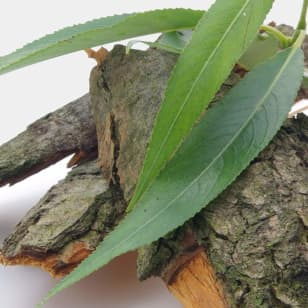 Product Page Key Ingredients: Willow Bark