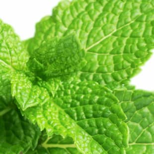 Product Page Key Ingredients: Mint