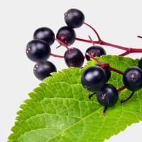 Product Page Key Ingredients: Elderberry