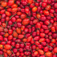Product Page Key Ingredients: Rosehip Seed Oil