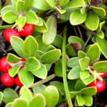 Product Page Key Ingredients: Bearberry