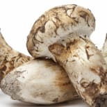 Product Page Key Ingredients: Matsutake Mushroom Extract