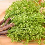Product Page Key Ingredients: Neem