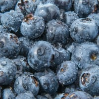Product Page Key Ingredients: Bilberry