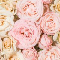 Product Page Key Ingredients: Rose Petal